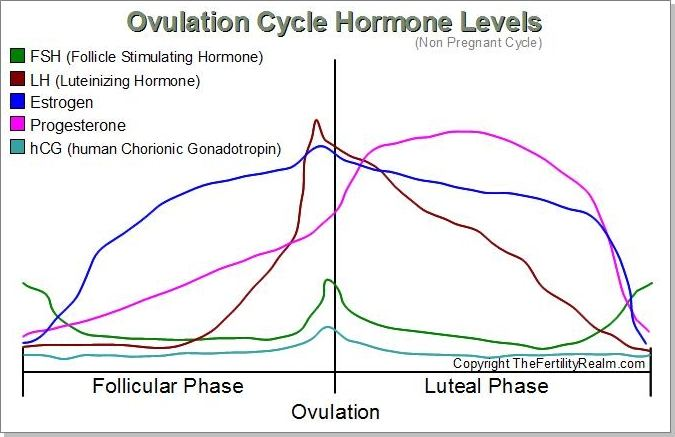 Ovulation cycle hormones