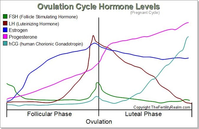 hormone levels during menstrual cycle The combination of high estrogen and progesterone levels suppress further ovulation during pregnancy progesterone menstrual period), your hormone levels.