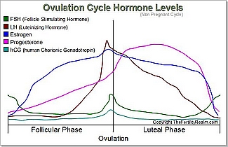 Ovulation Cycle Hormone Levels Diagram -not pregnant