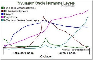 Ovulation Cycle Hormone Levels Diagram -pregnant